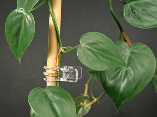 Versatile Transparent Plant Clips - Unobtrusive transparent plant clips.